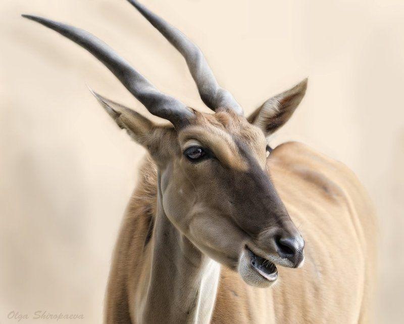 животные, зоопарк, нежность Нежная. фото превью