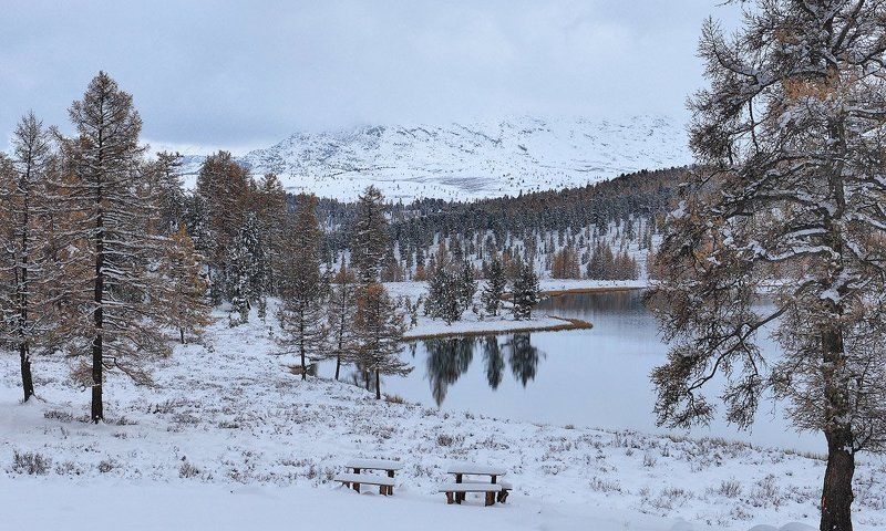 пейзаж, природа, снег, горы, алтай, осень Первый снегphoto preview