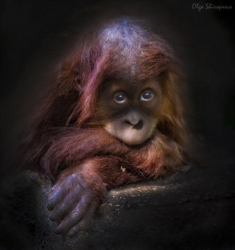 зоопарк, звери, тель-авив, чувства Мне грустно. фото превью