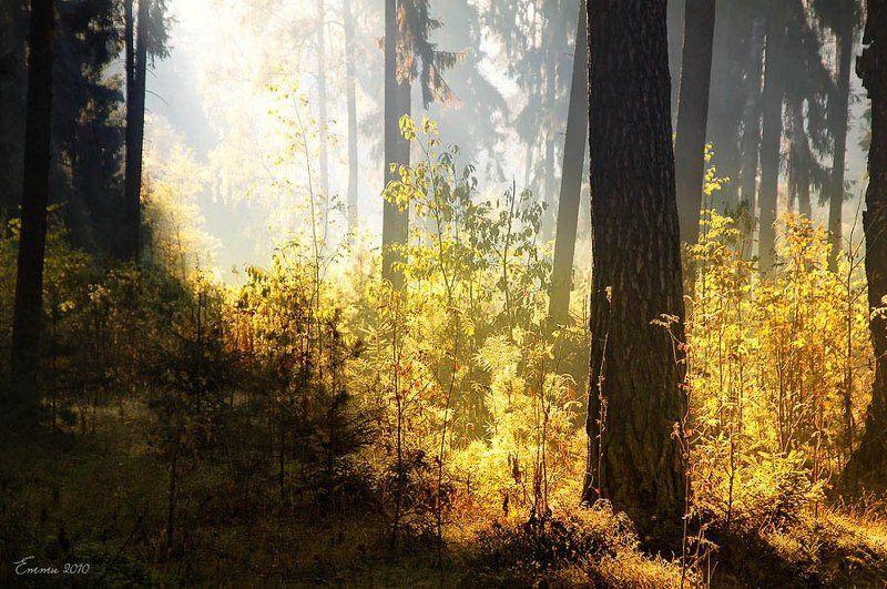 осень, лес, природа Где-то в лесу..photo preview