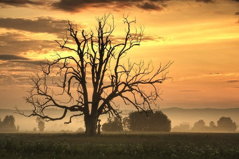 landscape,sunrise,tree tree with a soulphoto preview