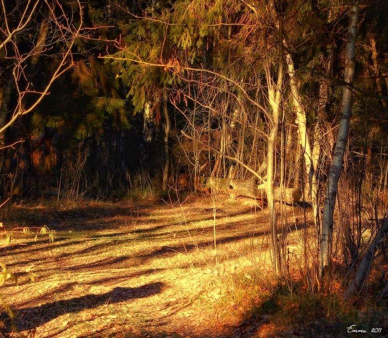 лес, природа ***photo preview