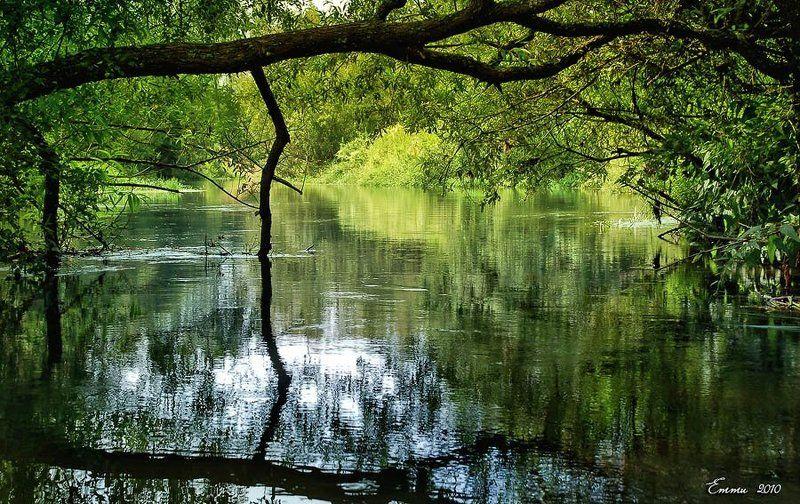природа, река, лето, вода Свежесть реки....photo preview