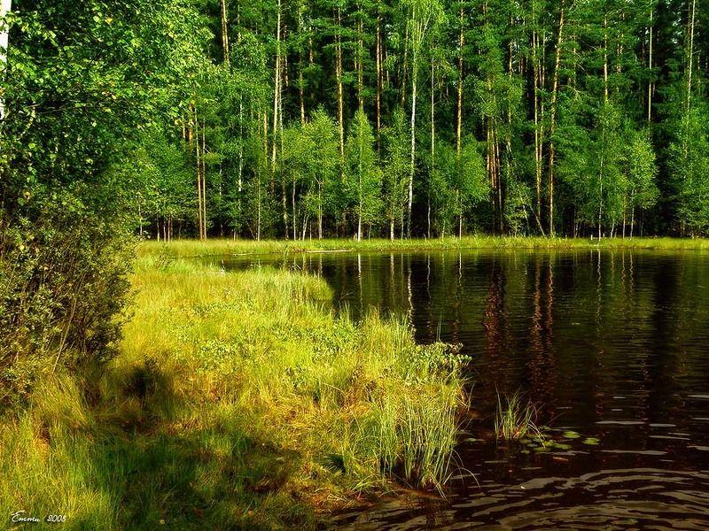 природа, лето, озеро Лесное озеро.photo preview