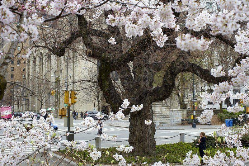 нью-йорк Весна идёт, весне дорогу!photo preview