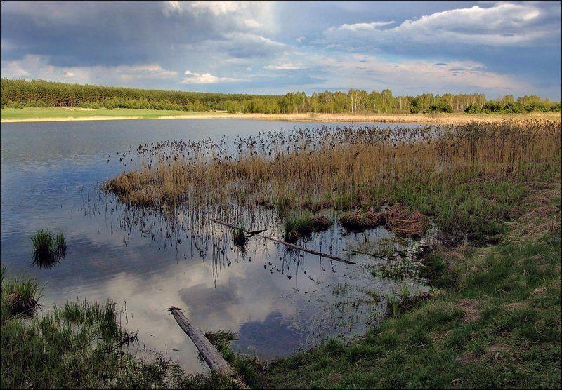 рязанщина, весна, озеро, берег Берега...photo preview