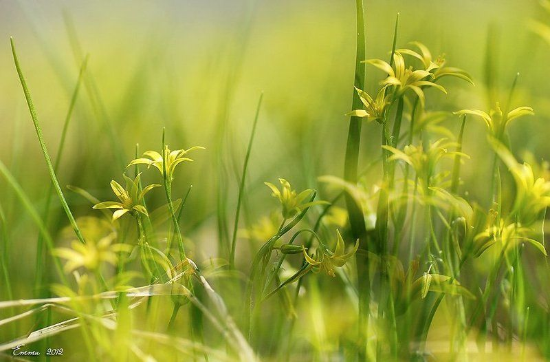 природа, весна, трава, цветы Сорняк.....photo preview
