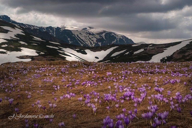 spring , bulgaria , whisper whisper of springphoto preview