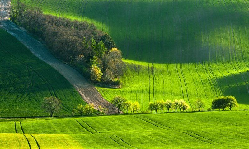 marcinkesek, landscape, springs, fields, moravia, slovakia, light, forest Spring fairyphoto preview