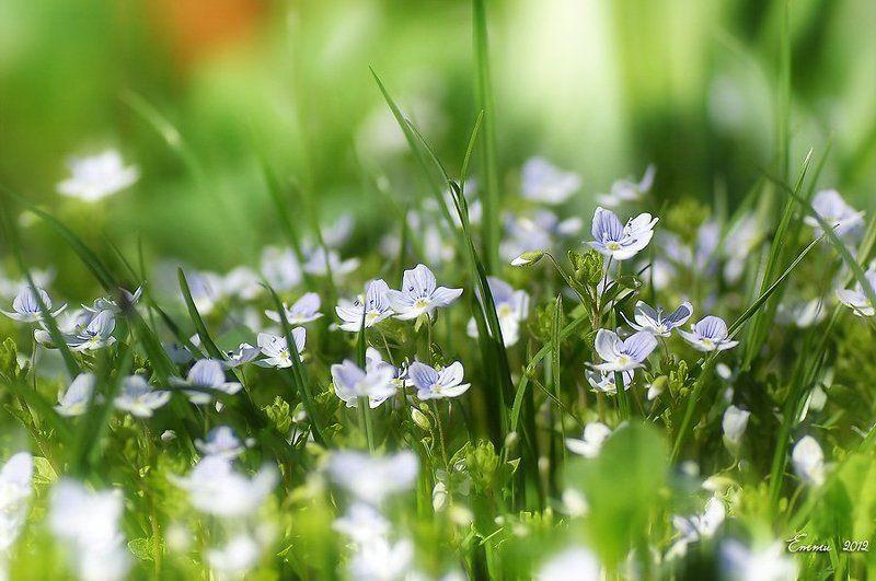 цветы, природа, весна, макро, трава Травенная жизнь....photo preview