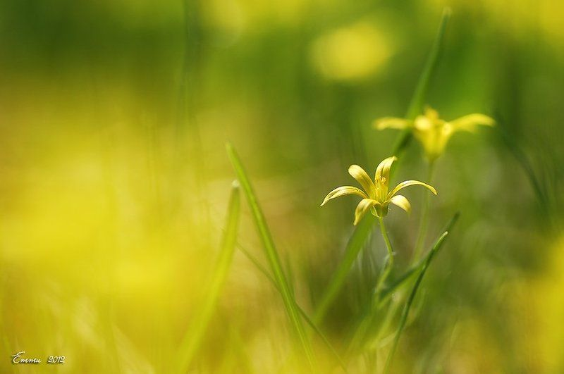 цветы, природа, весна, макро, трава Весенний мотив....photo preview