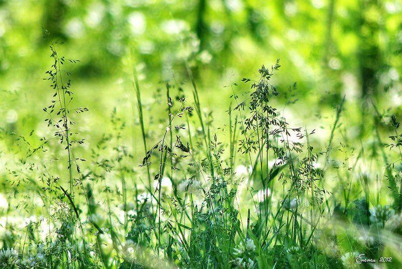 трава, природа, лето Трава...photo preview