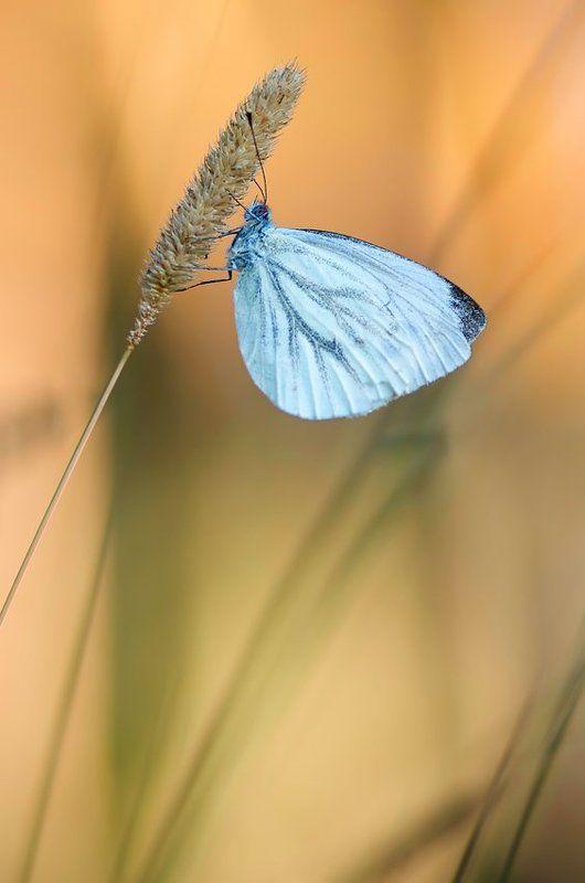 утренние бабочки...photo preview
