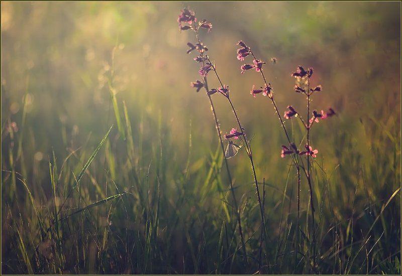 Июньский зной.photo preview