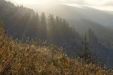 Дыхание карпатского утра