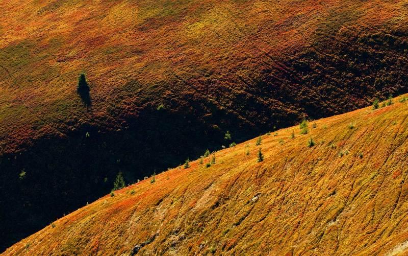 Осенняя палитра Боржавыphoto preview