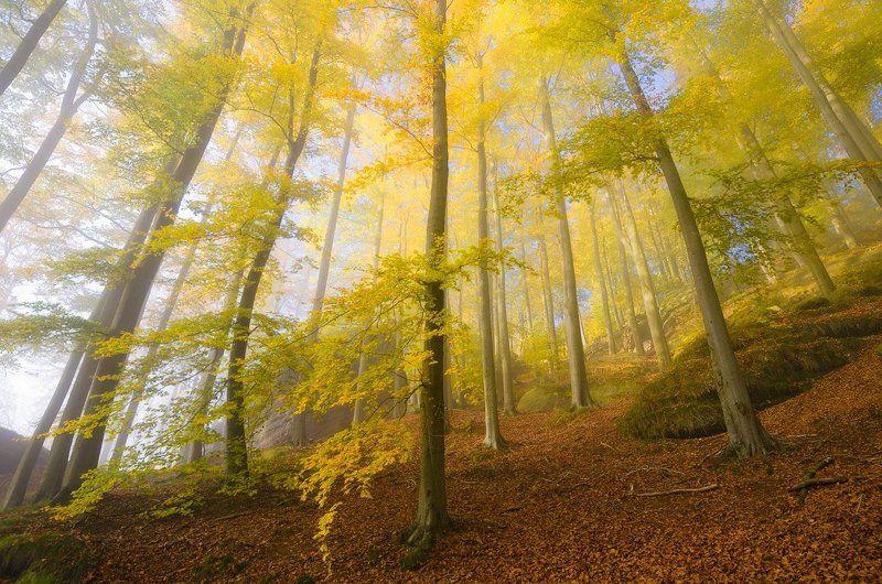 утро, осень, пейзаж, лес, туман Золотая осеньphoto preview