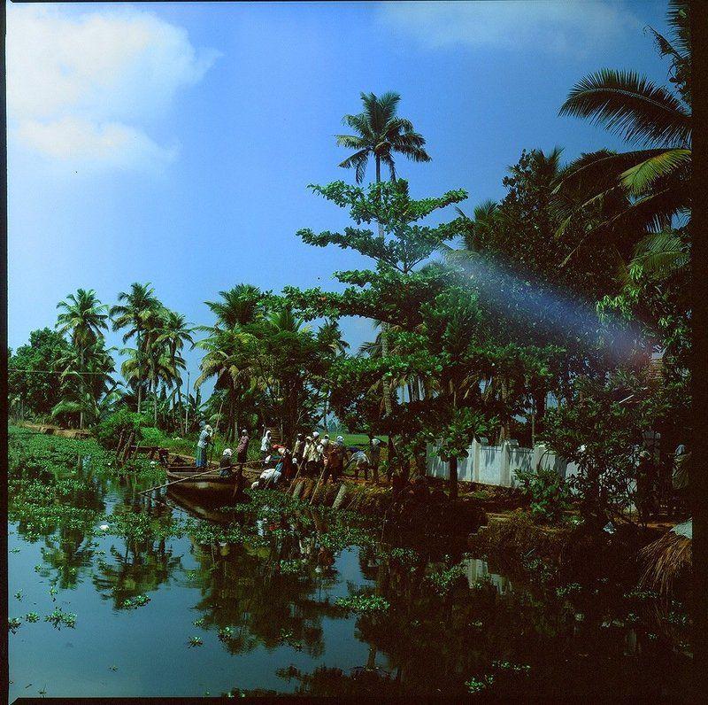 индия, backwaters, лодка, канал, пальма Жизнь каналов Backwatersphoto preview