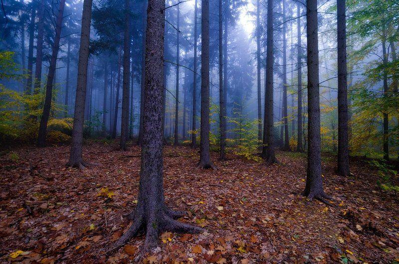 лес,осень,утро,туман Про лесphoto preview