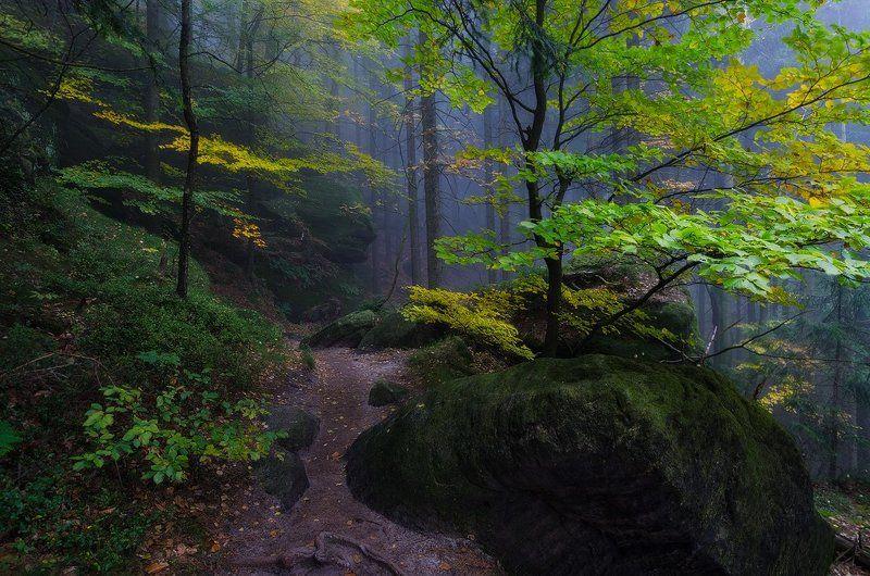 пейзаж,лес,осень,саксония,утро Wild placephoto preview