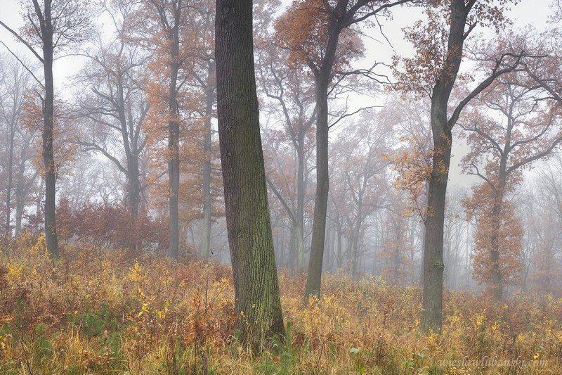 oaks, forest, lubanski Oaksphoto preview