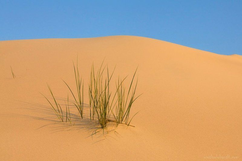 dune, lubanski a dunephoto preview