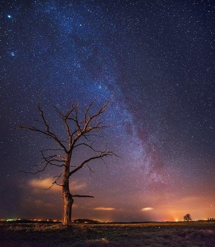 путь к забытому дереву...photo preview