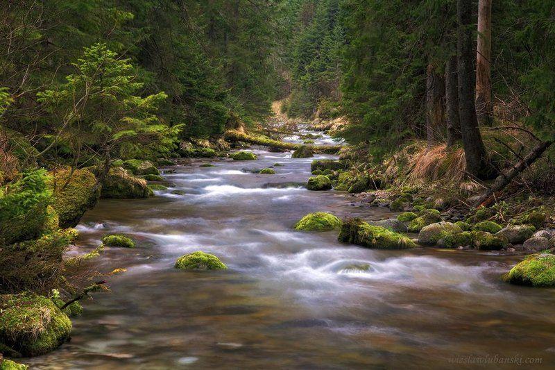 stream streamphoto preview