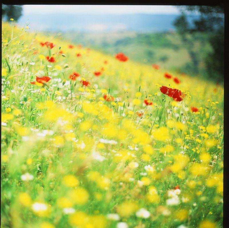 маки, поле, цветы, лето, тоскана, италия, холмы Тосканские поляphoto preview