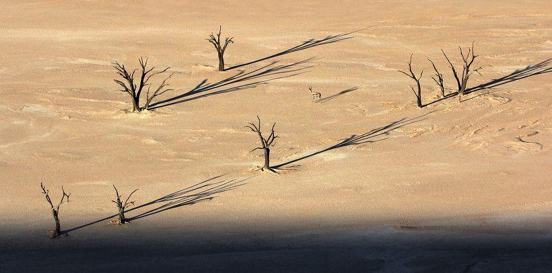 Сказка о глупом козёлике, за деревьями не разглядевшем лесаphoto preview