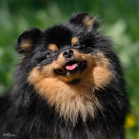 Portrait of a photographer (avatar) Коптилина Галина (kOPTILINA GALINA)