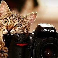 Portrait of a photographer (avatar) Георгий Дьяков (Georgy Dyakov)