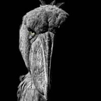 Portrait of a photographer (avatar) Александр Санин (Alexandr Sanin)