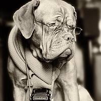 Portrait of a photographer (avatar) Verze Olek (Olek Verze)