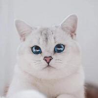 Portrait of a photographer (avatar) Sergey (Pestov)
