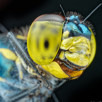 Portrait of a photographer (avatar) VOON YIAN KHIAM