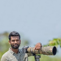 Portrait of a photographer (avatar) Senanayakege Mithun (Mithun Senanayakege)